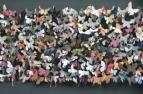 'Wall' Lasiommata megera