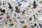 details of 'Birds 01'