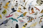detail of 'Birds 01'