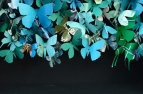 'Butterfly Box 08'